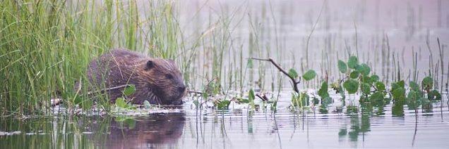 Beaver Believers Film Screening in Bend Oregon – OCTOBER 6TH